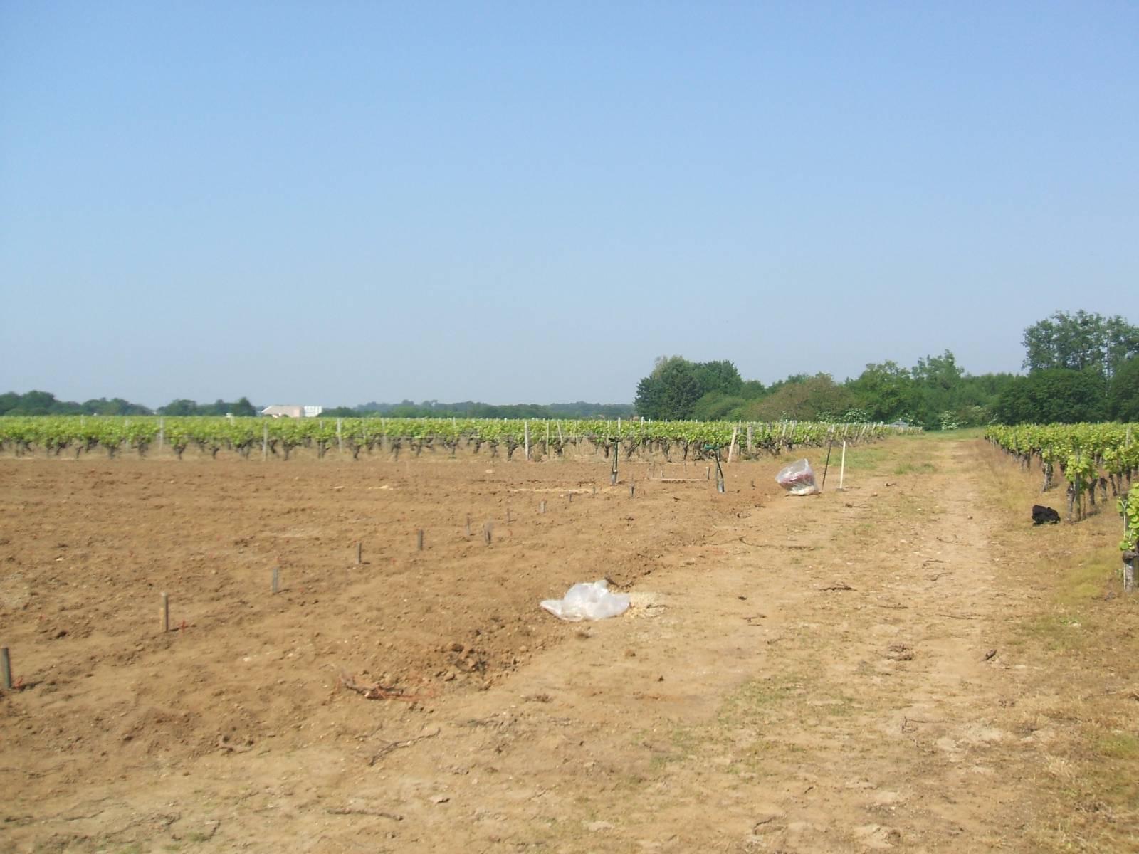 Domaine du paradis avec les cépages traditionnels du vignoble