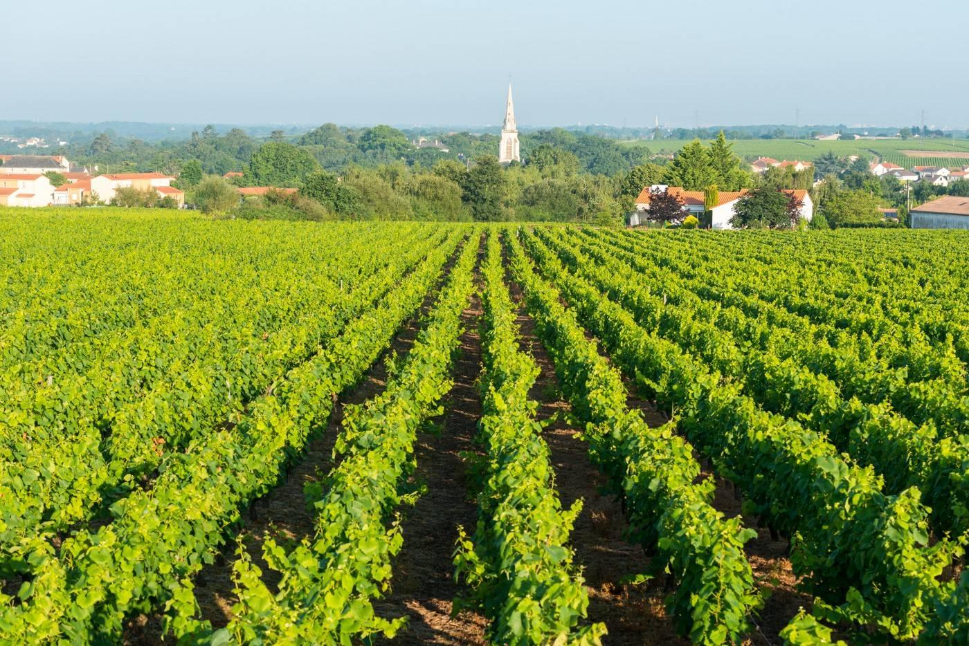 viticulteur domaine du Paradis
