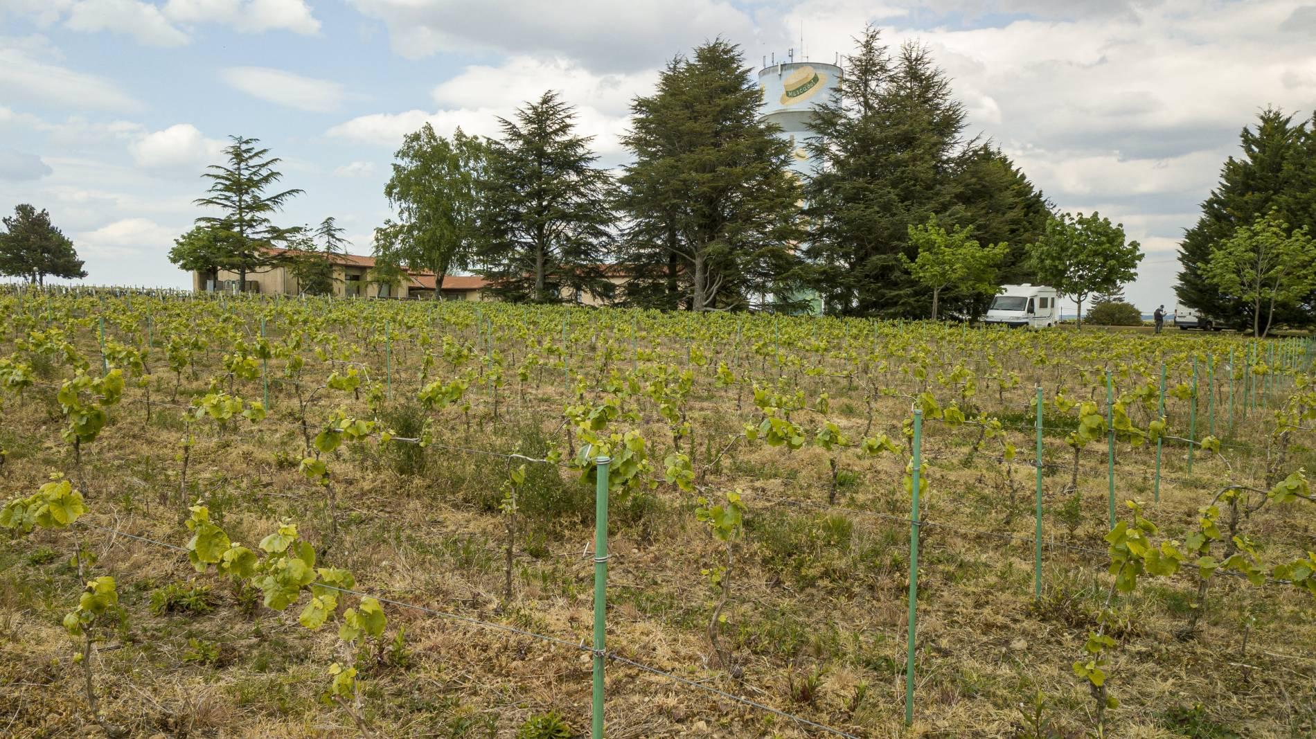 Domaine du paradis:producteur du vignoble nantais