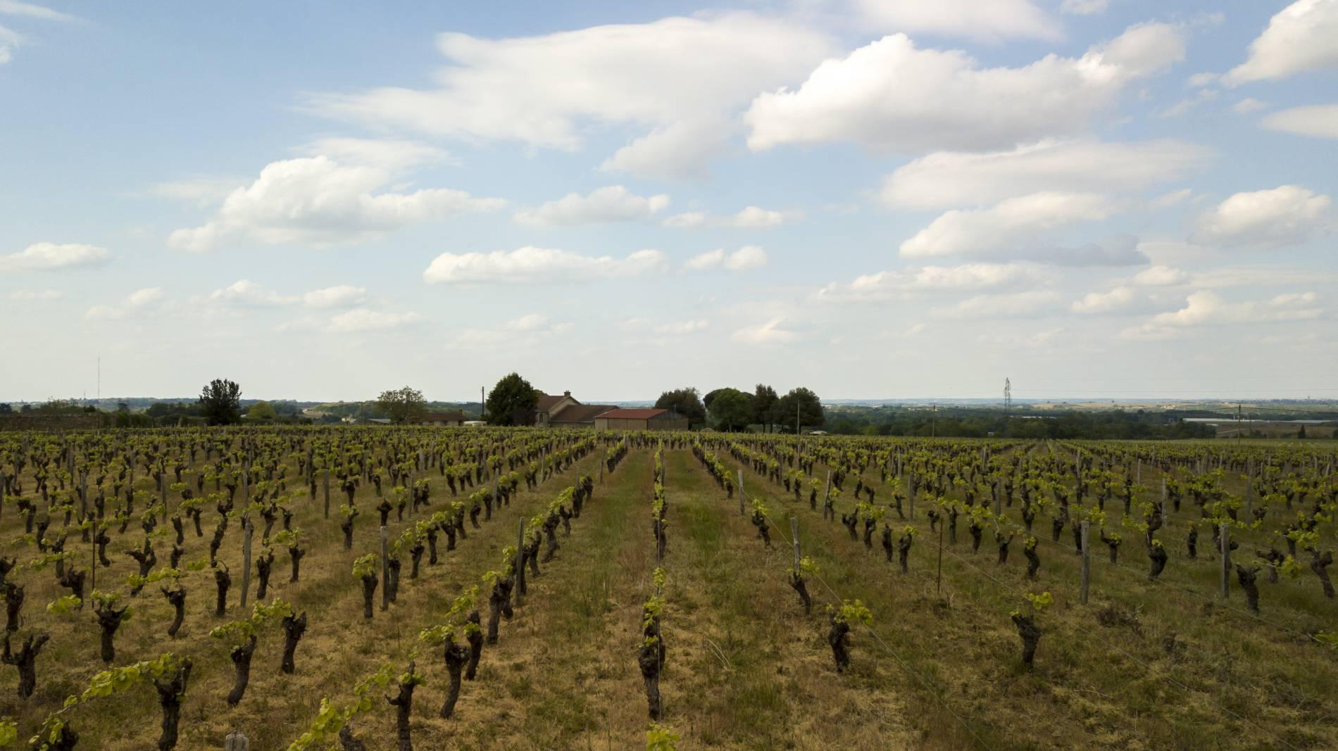 Domain du paradis producteur du vin muscadet