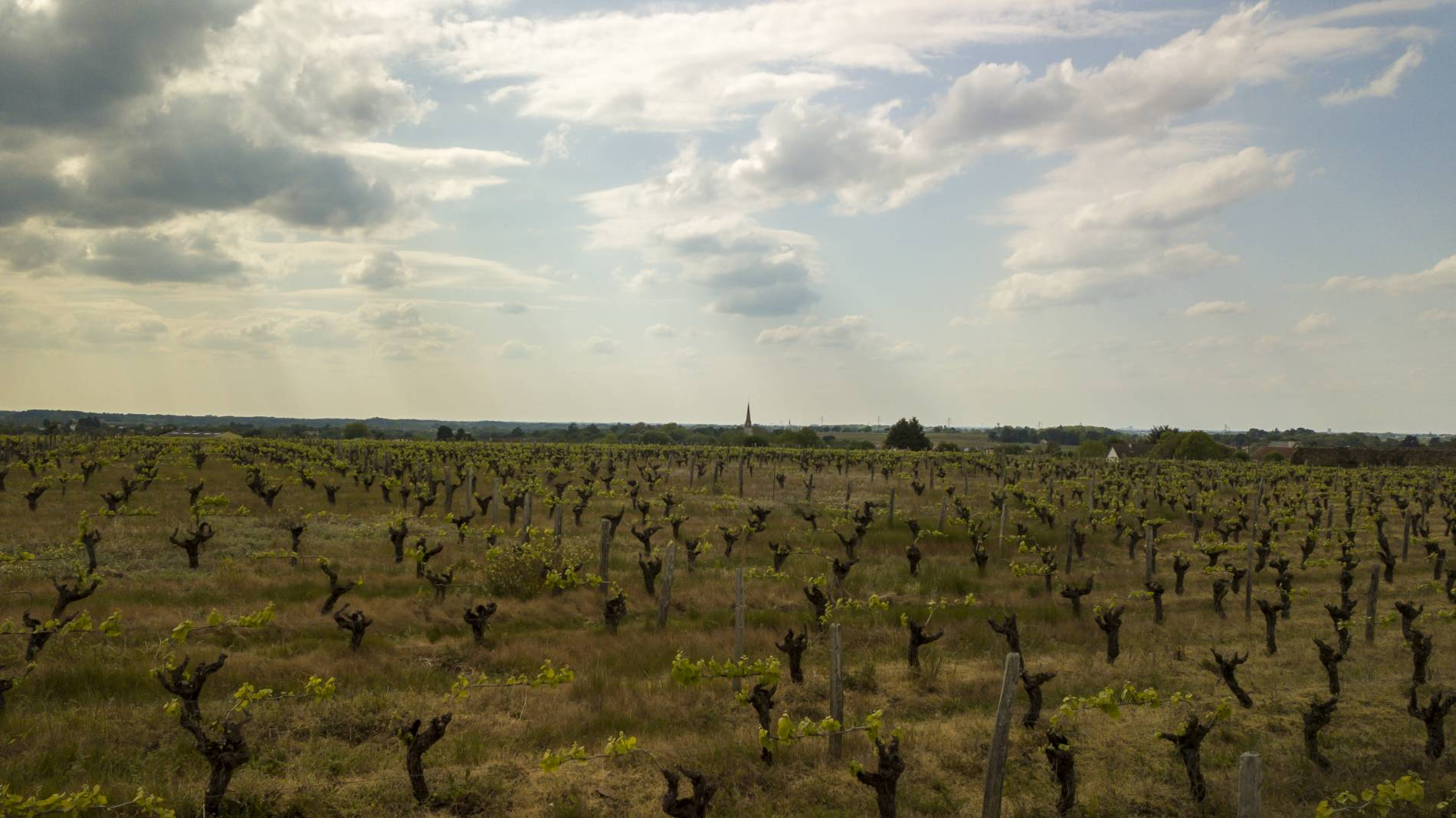 Domaine de paradis : producteur du vin muscadet  avec méthode Nantaise