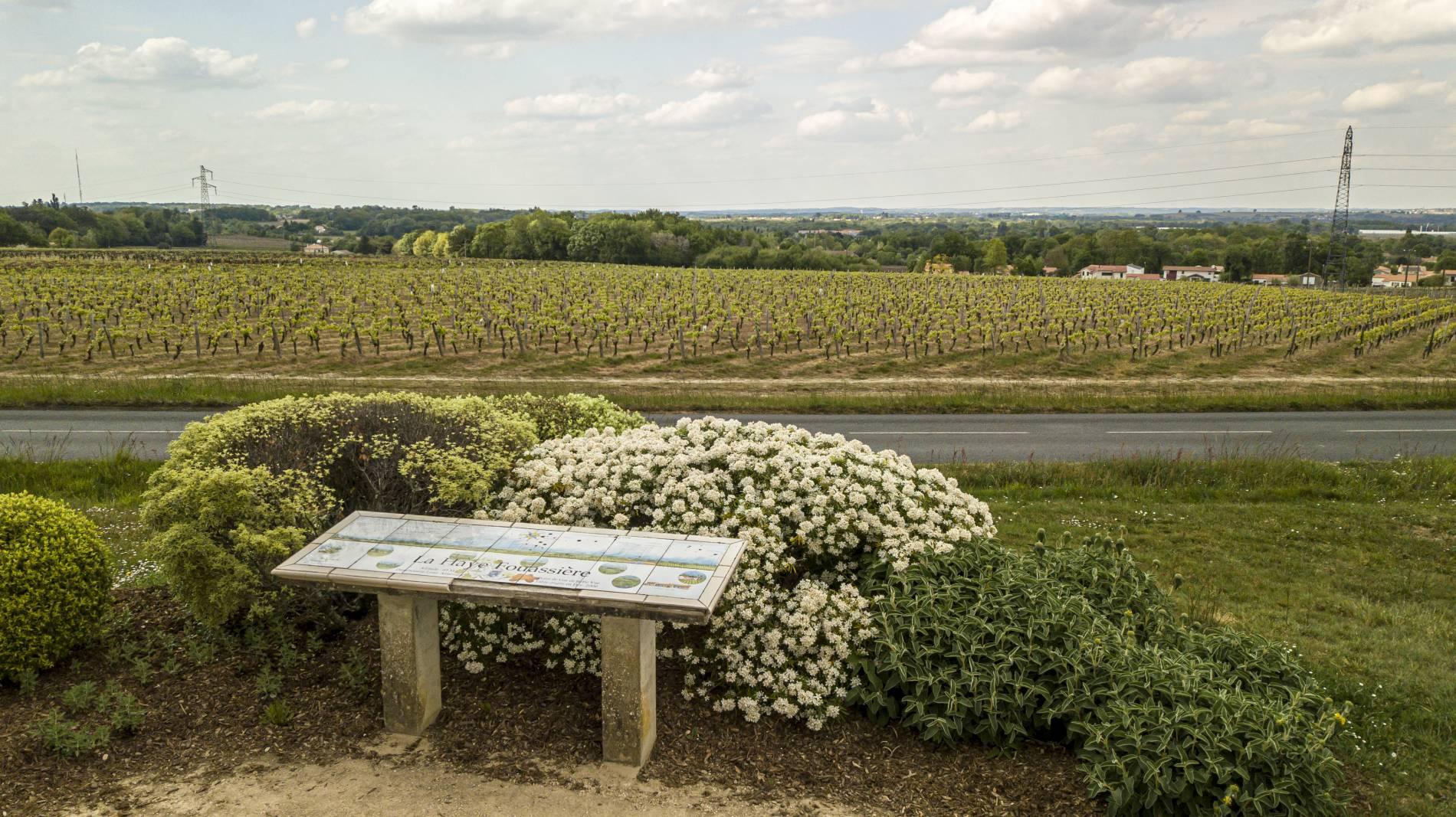 Domaine du paradis : vente vin muscadet en ligne